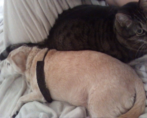 max and Sandy lying beside me