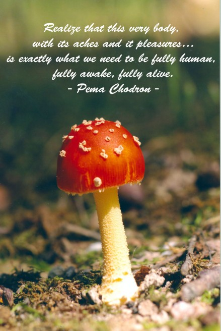 mushroom with quote