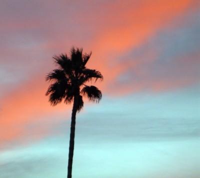 palm tree palm springs