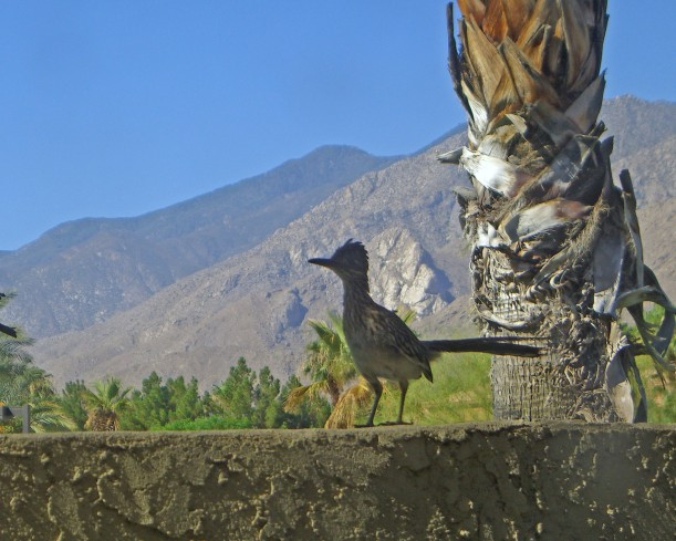 road runner porch palm springs
