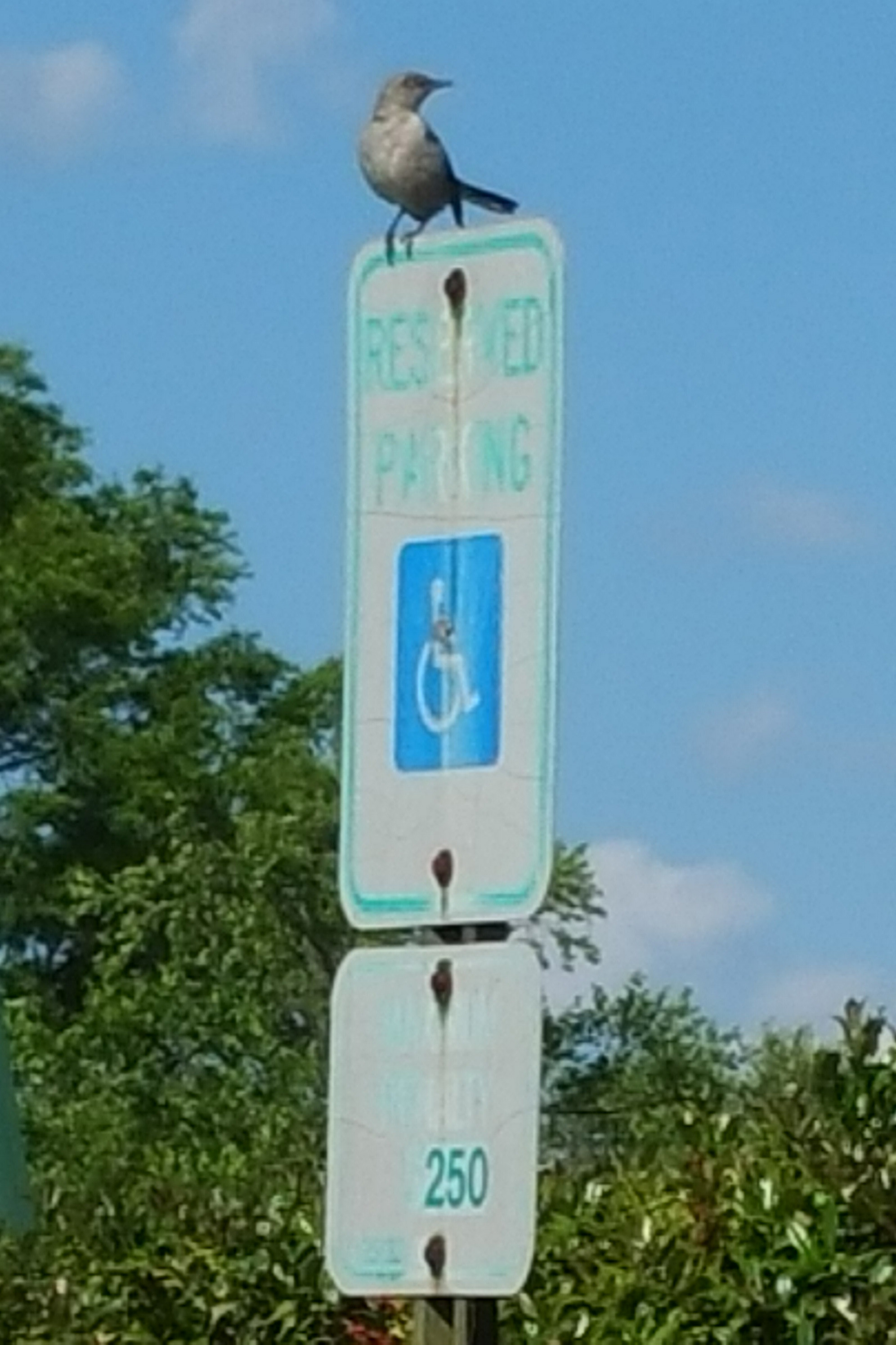 bird on handicap sign.jpg