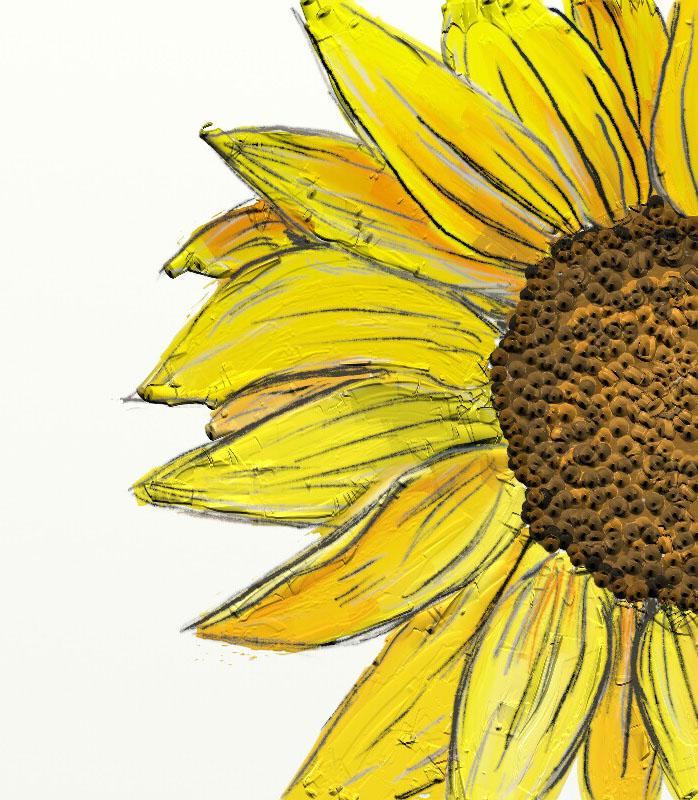 Sunflower_001