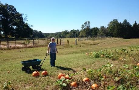 pumpking-patch-wendy