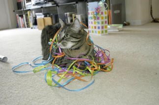 max with ribbons 2