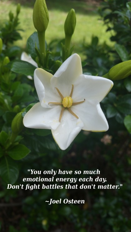 flower with Joel Osteen quote