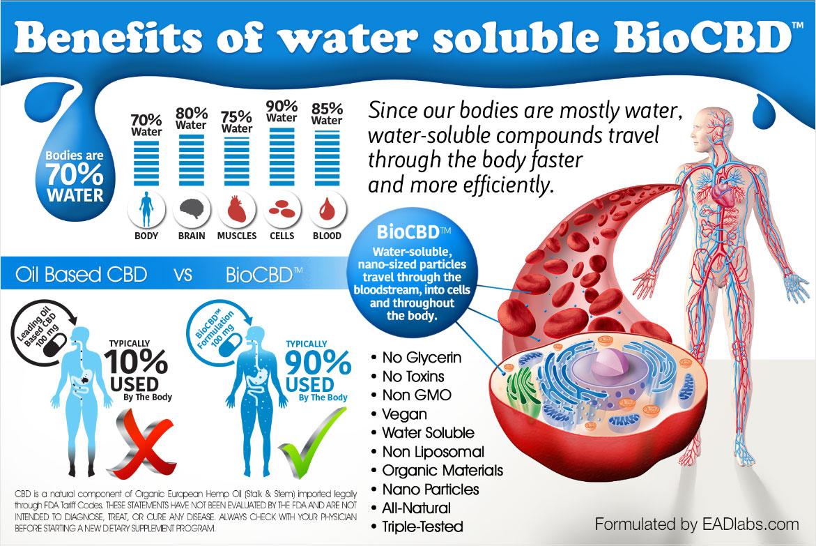 CBD bioavailable